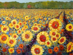 16 Acre Sunflower Field