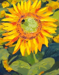 Sunflower Study 159