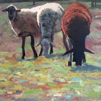 "36"" x 36"" Three Sheep"